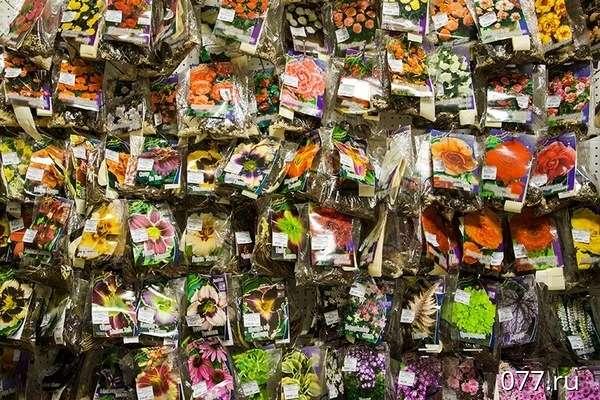 Адрес магазина среди цветов, цветы гомера россию
